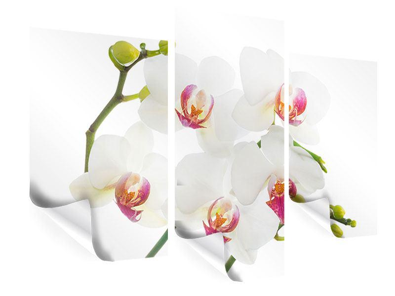 Poster 3-teilig modern Orchideenliebe