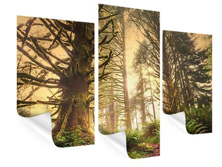 Poster 3-teilig modern Sonnenuntergang im Dschungel