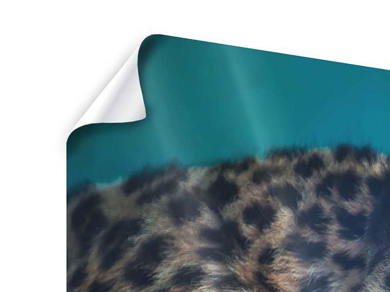 Poster 3-teilig modern Leopard XL