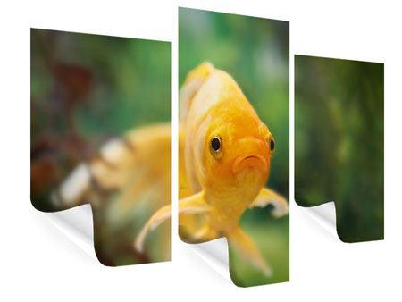 Poster 3-teilig modern Der Fisch