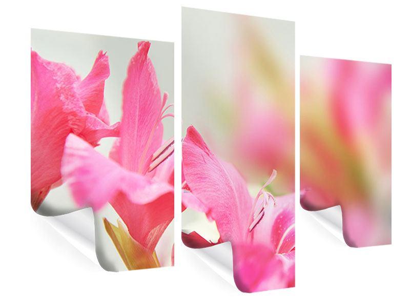 Poster 3-teilig modern Gladiolen