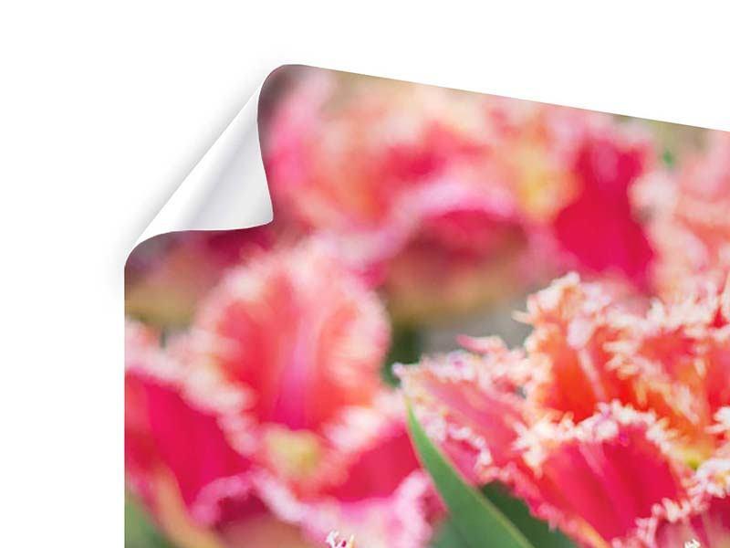 Poster 3-teilig modern Die Tulpenwiese