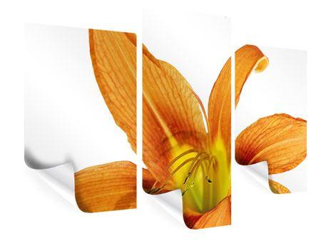 Poster 3-teilig modern Die Tiger-Lilie