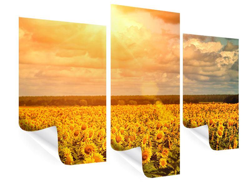 poster 3 teilig modern goldenes licht f r sonnenblumen. Black Bedroom Furniture Sets. Home Design Ideas
