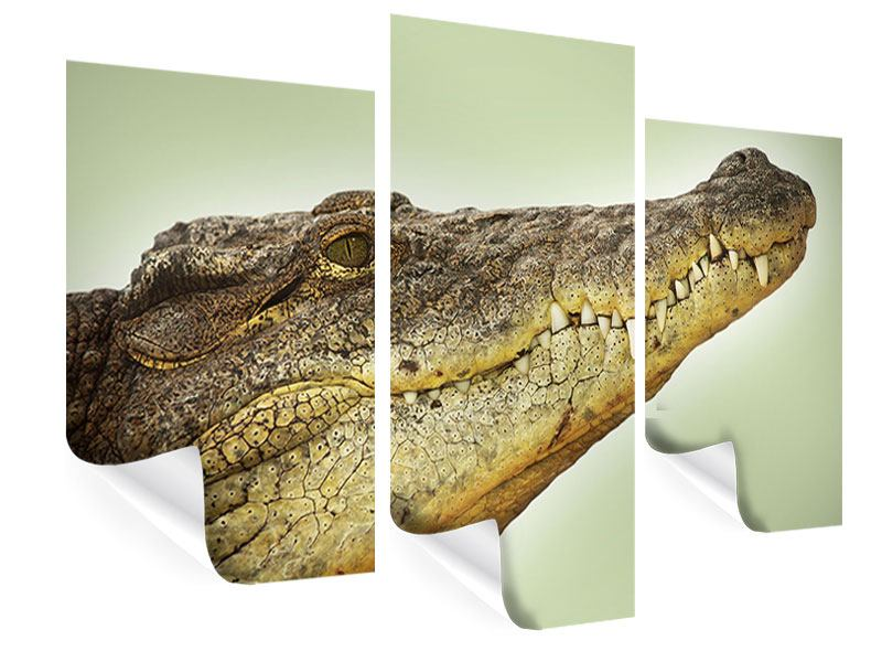 Poster 3-teilig modern Close Up Alligator