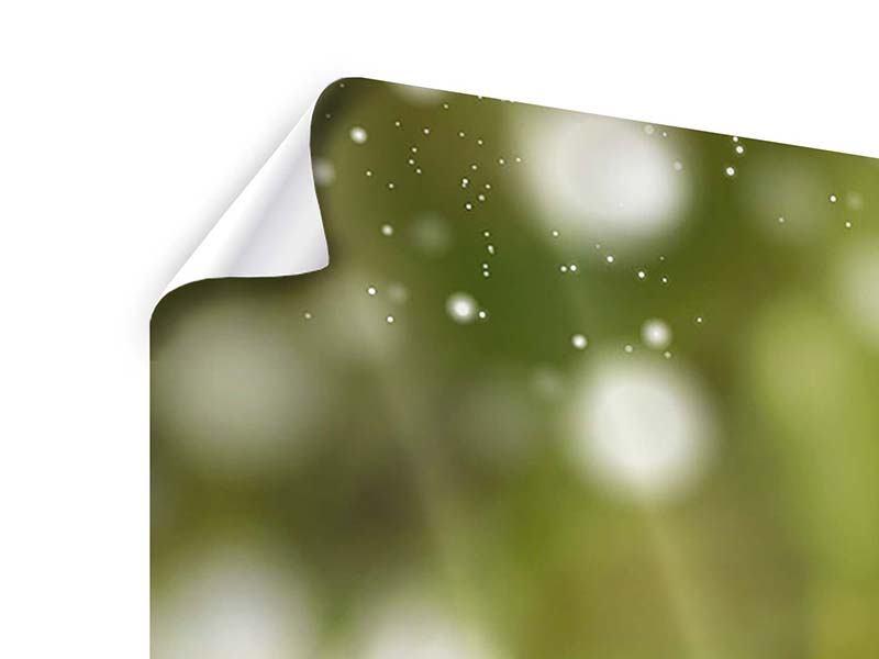 Poster 3-teilig modern Lilien-Lichtspiel