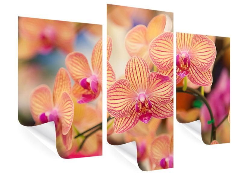Poster 3-teilig modern Exotische Orchideen
