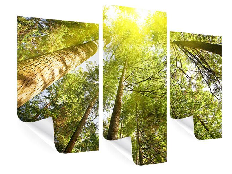 Poster 3-teilig modern Baumkronen in der Sonne