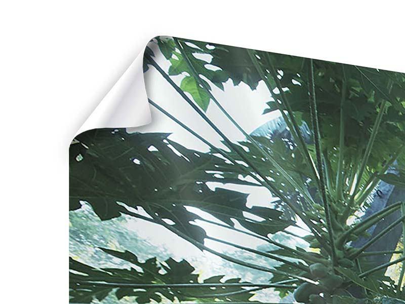 Poster 3-teilig modern Dschungelstar