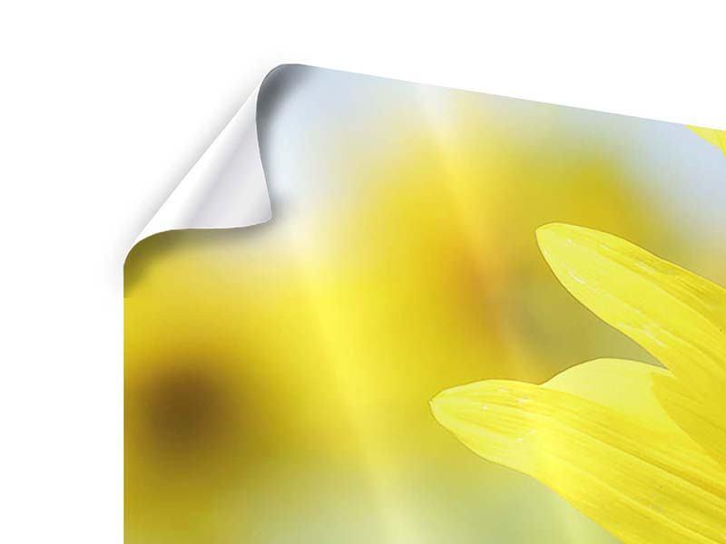 Poster 3-teilig modern Die Blume der Sonne