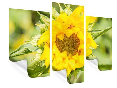 Poster 3-teilig modern Wilde Sonnenblume