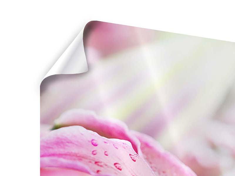 Poster 3-teilig modern Lilien im Tau