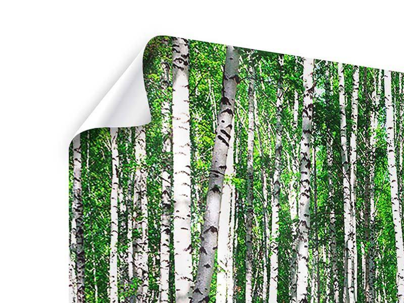 Poster 3-teilig modern Sommerlicher Birkenwald