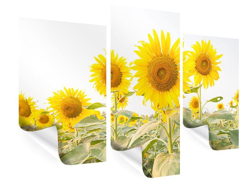 Poster 3-teilig modern Das Sonnenblumenfeld