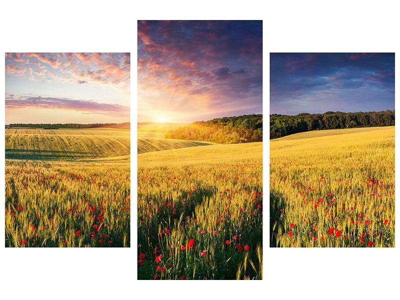 Poster 3-teilig modern Ein Blumenfeld bei Sonnenaufgang