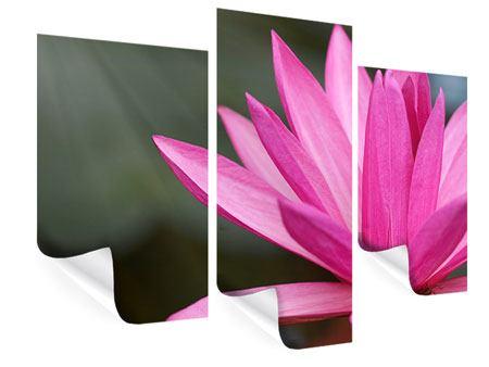 Poster 3-teilig modern XXL Seerose in Pink