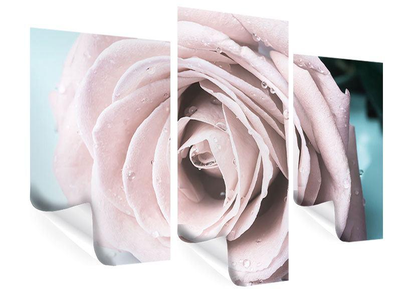 Poster 3-teilig modern Pastellrose