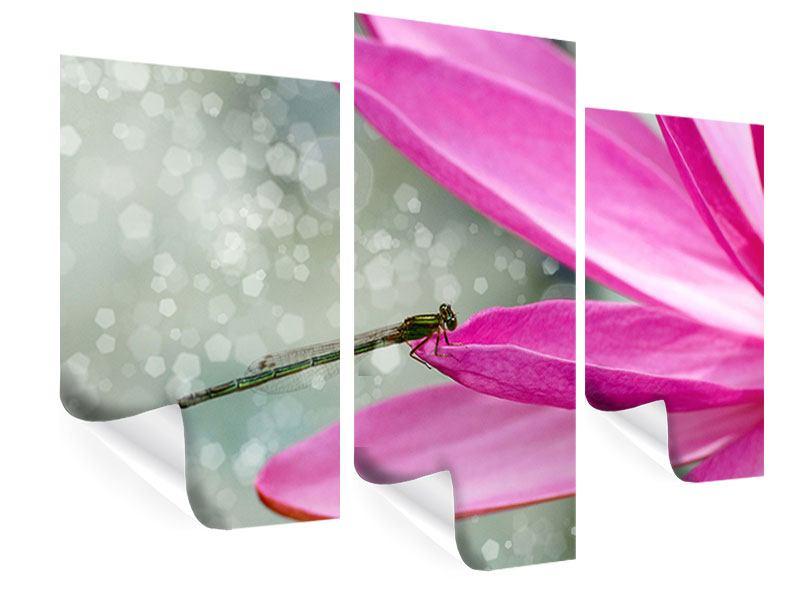 Poster 3-teilig modern Libelle auf dem Seerosenblatt
