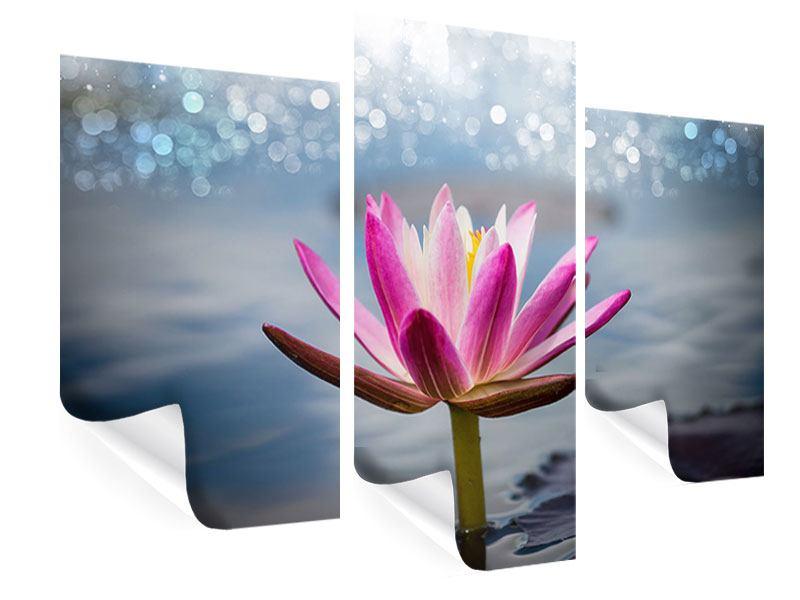 Poster 3-teilig modern Lotus im Morgentau
