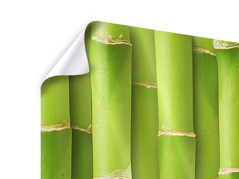 Poster 3-teilig modern Bambuswand