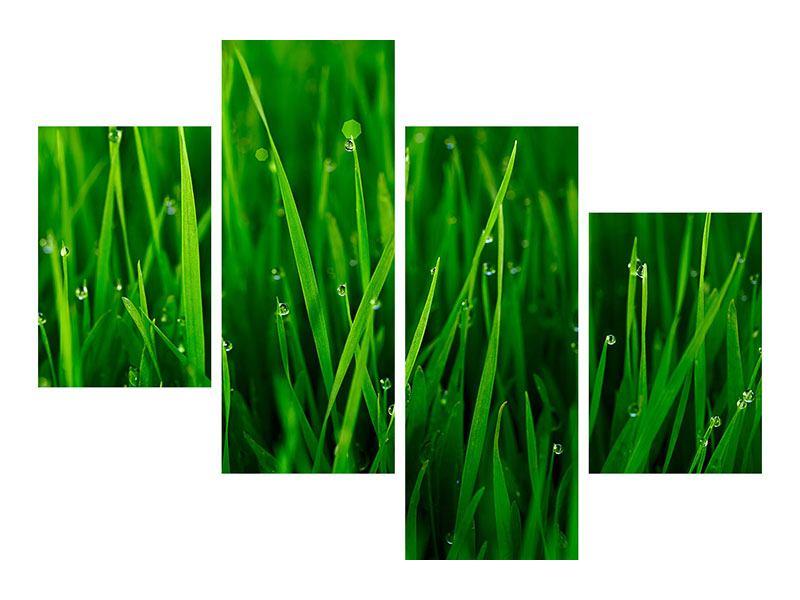 Poster 4-teilig modern Gras mit Morgentau