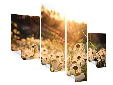 Poster 4-teilig modern Gänseblümchen bei Sonnenuntergang