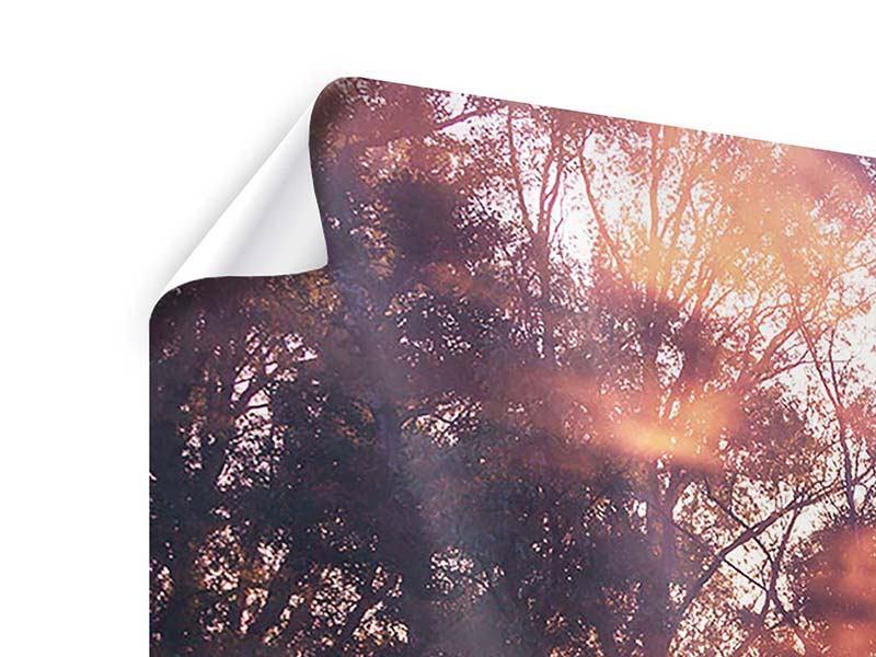 Poster 4-teilig modern Die Waldspiegelung