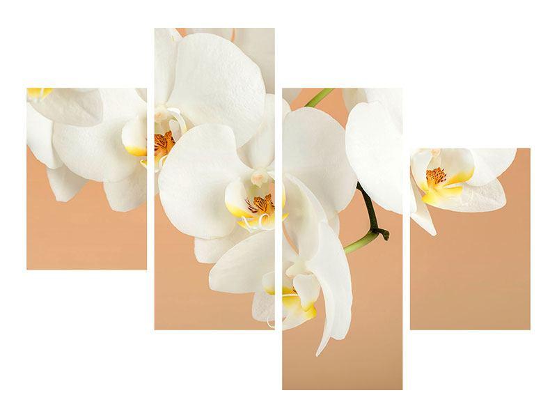 Poster 4-teilig modern Weisse Orchideenblüten