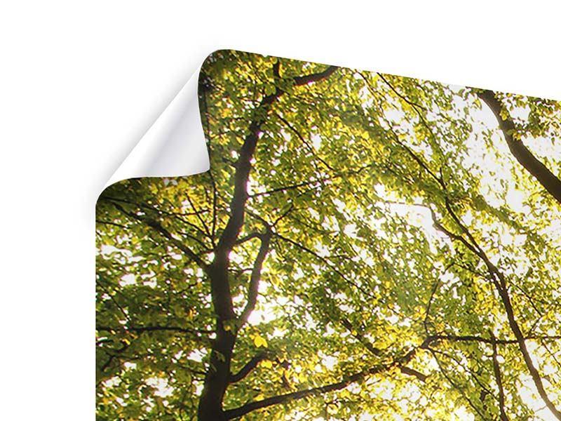 Poster 4-teilig modern Sonnenuntergang zwischen den Bäumen