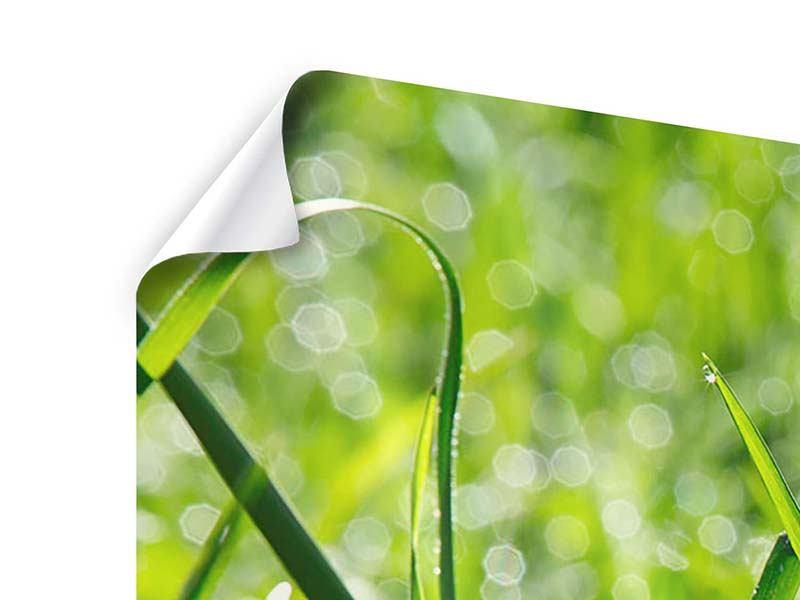 Poster 4-teilig modern Sonniges Gras