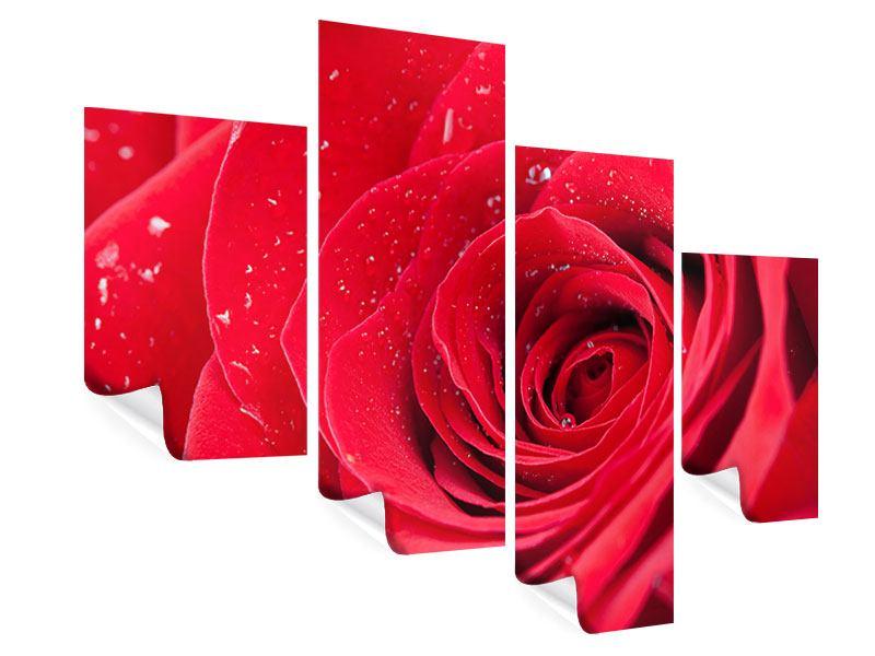 Poster 4-teilig modern Rote Rose im Morgentau
