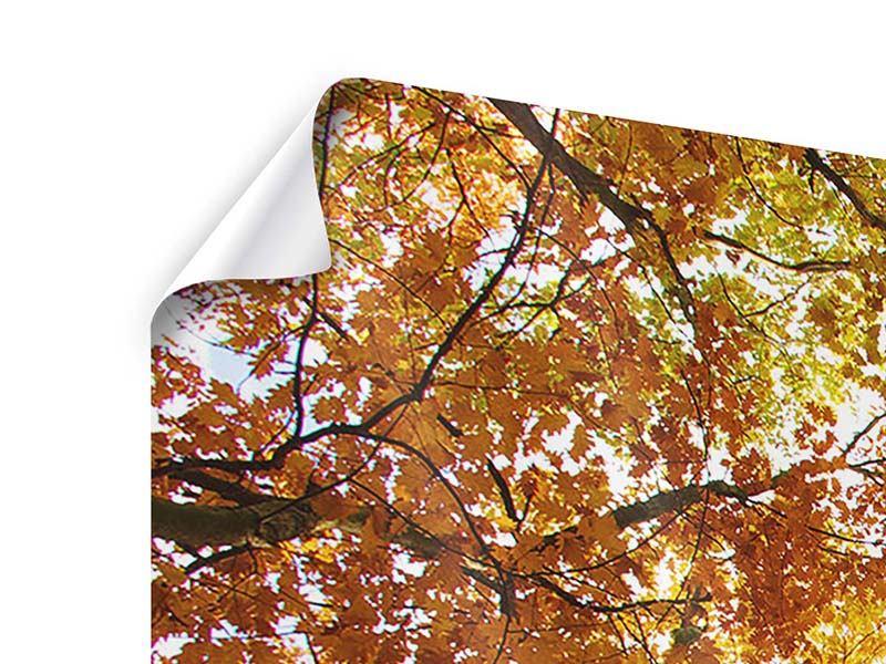 Poster 4-teilig modern Herbstbäume