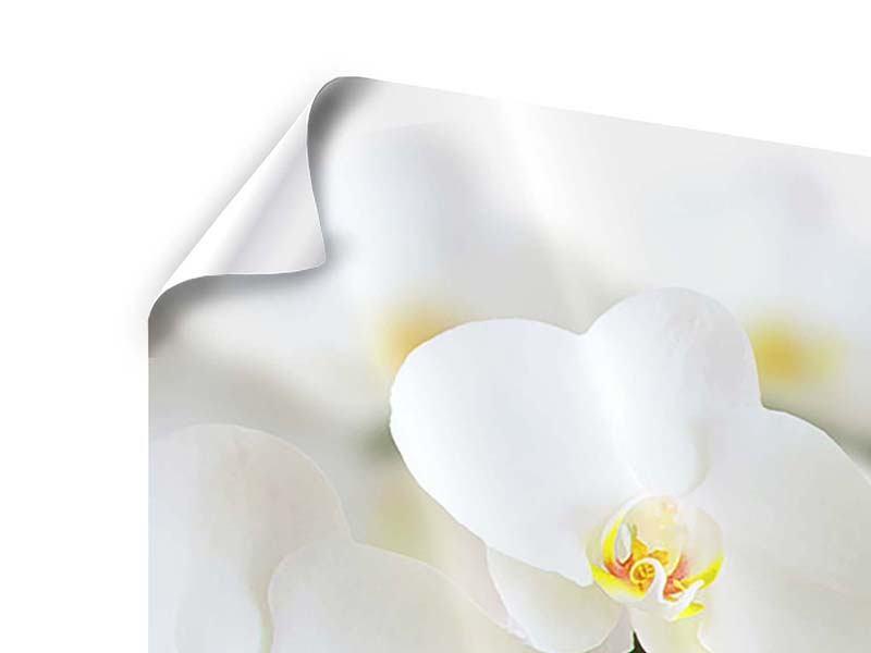 Poster 4-teilig modern Weisse Orchideen