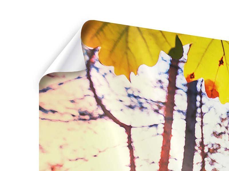 Poster 4-teilig modern Herbst