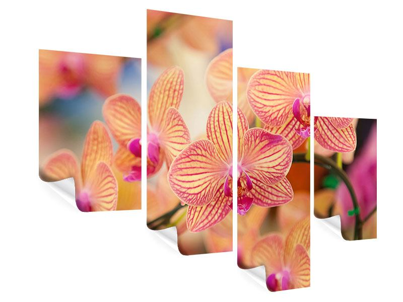 Poster 4-teilig modern Exotische Orchideen