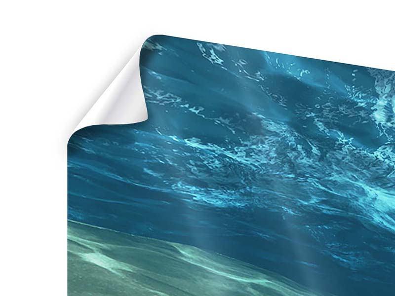 Poster 4-teilig modern Unter dem Wasser