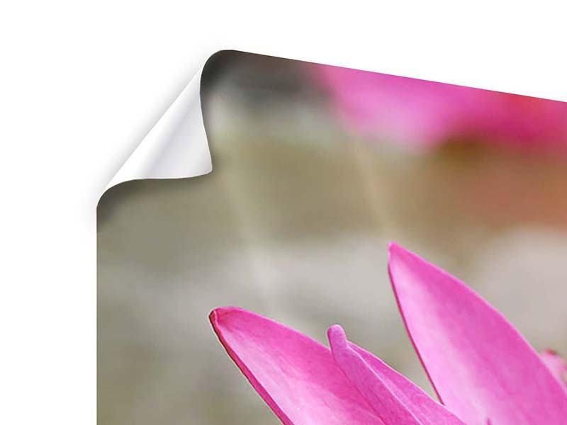 Poster 4-teilig modern Sonnige Seerose