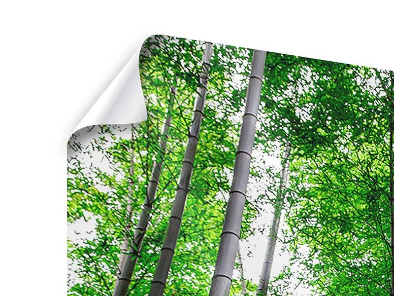 Poster 4-teilig modern Bambuswald