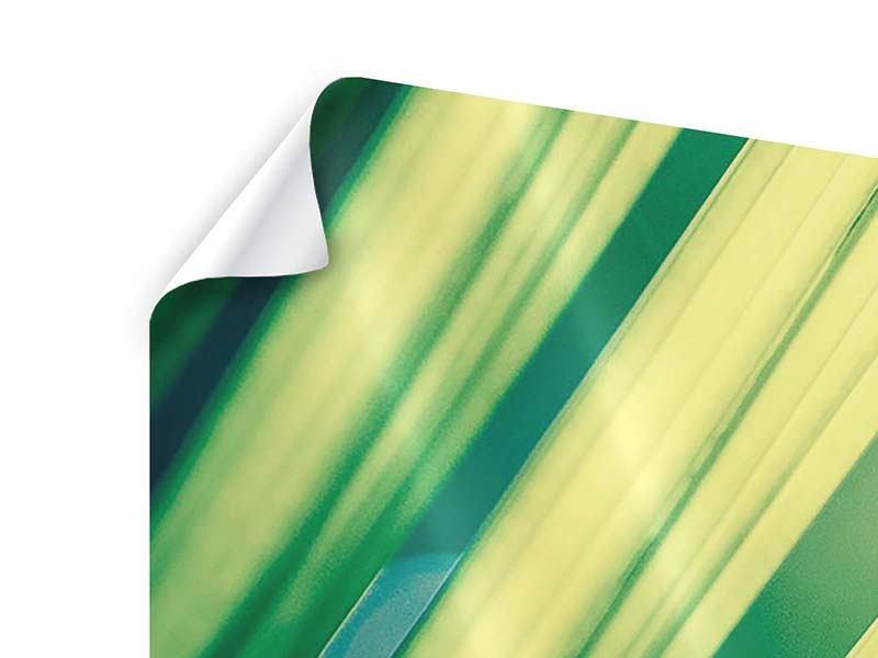 Poster 4-teilig modern Beleuchtetes Palmblatt