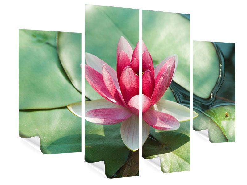 Poster 4-teilig Der Frosch und das Lotusblatt