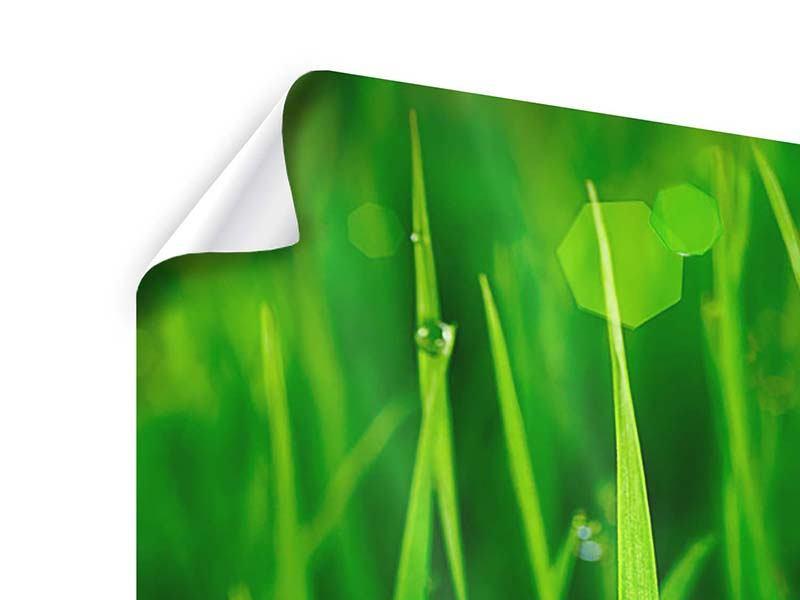 Poster 4-teilig Gras mit Morgentau