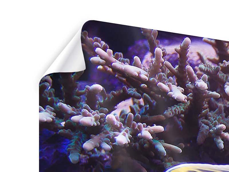 Poster 4-teilig Faszination Unterwasser