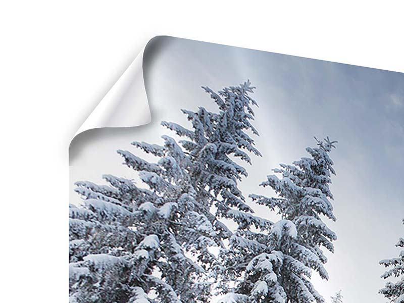 Poster 4-teilig Wintertannen
