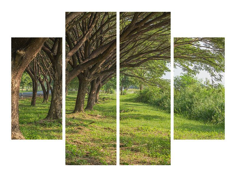 Poster 4-teilig Alter Baumbestand