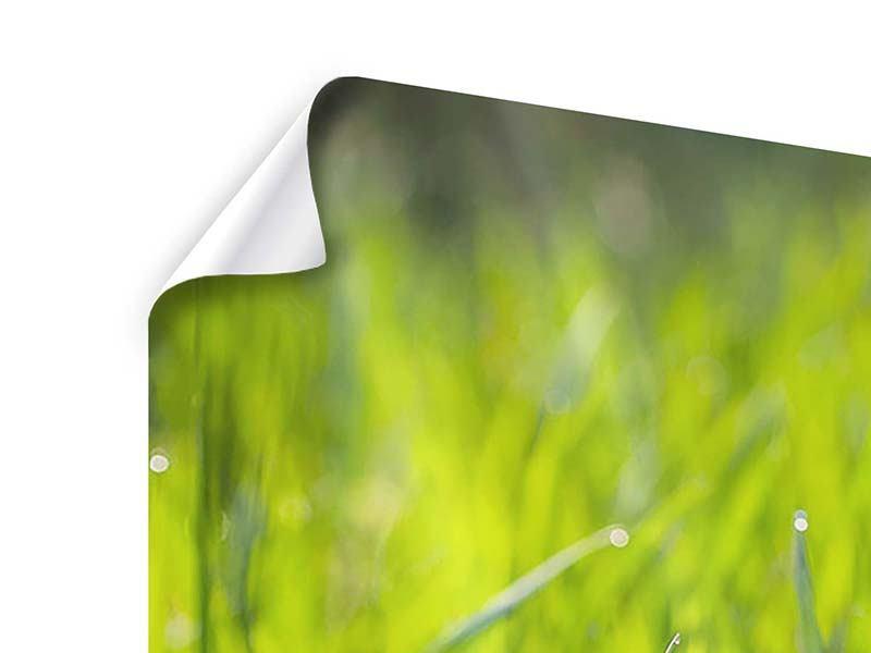 Poster 4-teilig Gras im Morgentau