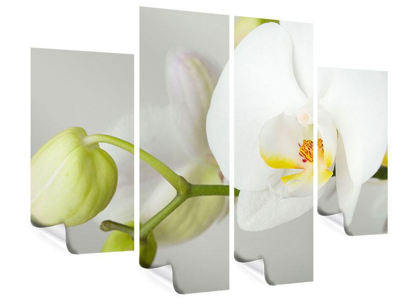 Poster 4-teilig Riesenorchidee