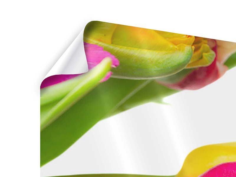 Poster 4-teilig Ein bunter Tulpenstrauss