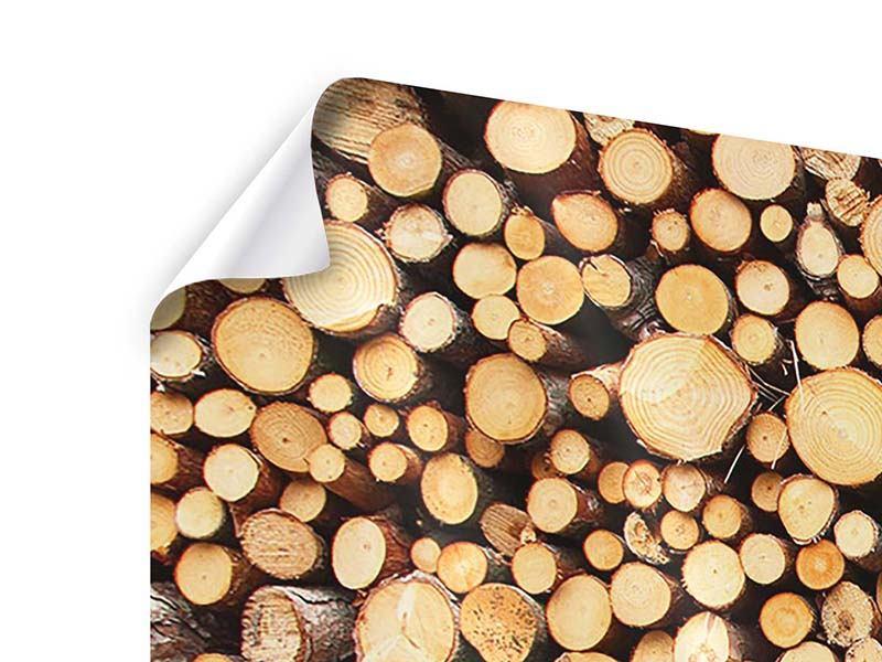 Poster 4-teilig Holzstämme
