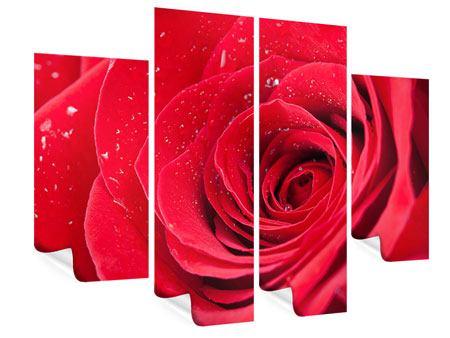 Poster 4-teilig Rote Rose im Morgentau