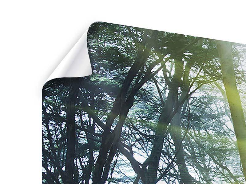 Poster 4-teilig Sonnenstrahlen im Wald